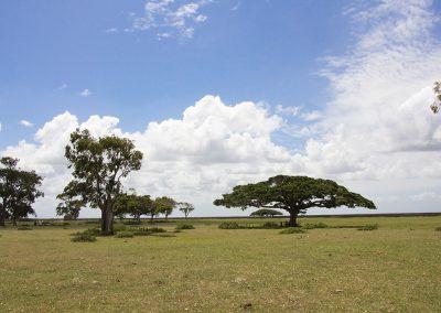 Ilha da Feitoria - Pelotas