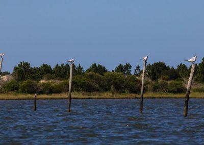 São José do Norte - Lagoa dos Patos - Andainas